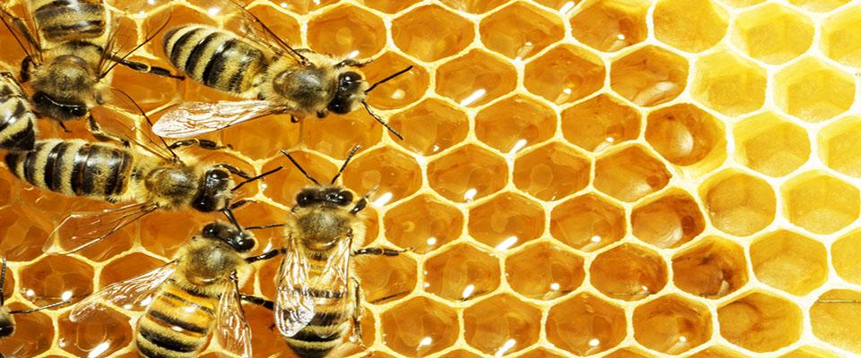 Bees in the School Garden | The Edible Schoolyard Project