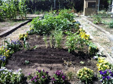 Modesto City Schools Farm To School The Edible Schoolyard Project